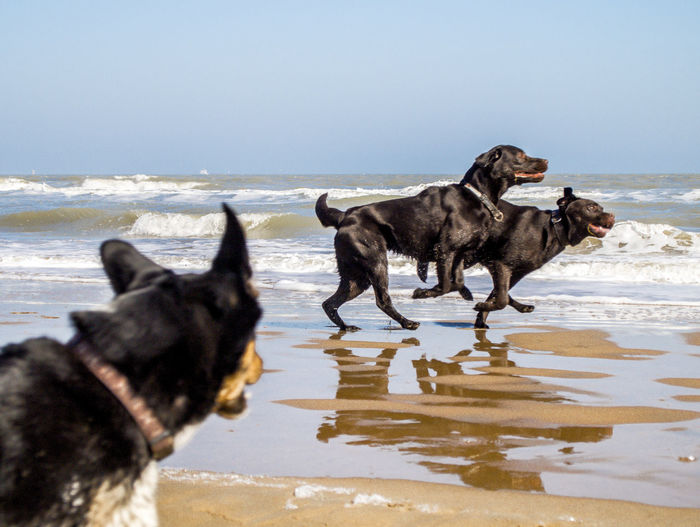 Dogs Animal Themes Dogs On Beach Dogs Playing At The Beach Motion Nature No People Sea Water