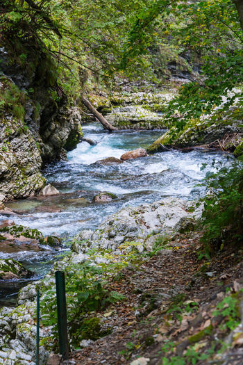 Vintgar Gorge Water Plant Beauty In Nature Motion Flowing Water Tree Scenics - Nature Forest Nature No People Land Day Solid River Rock Flowing Growth Tranquility Stream - Flowing Water Outdoors