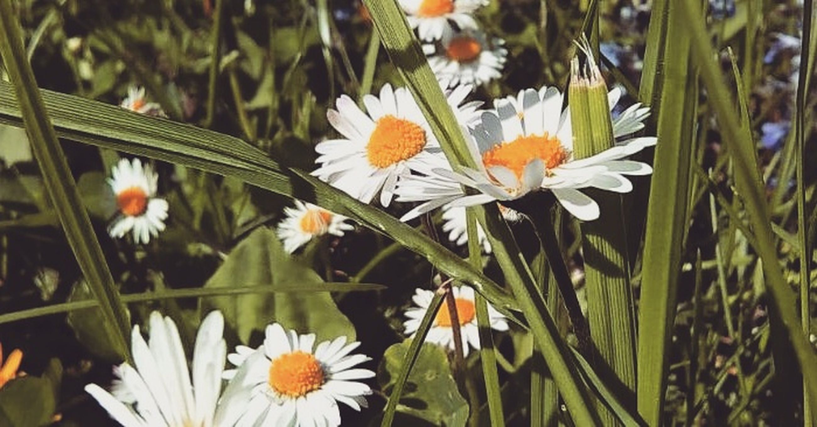flower, fragility, nature, beauty in nature, freshness, growth, petal, plant, blooming, flower head, no people, green color, outdoors, day, close-up