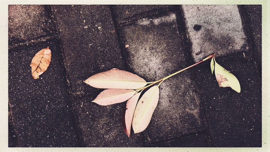 Streetphotography Auto Post Production Filter Transfer Print No People Close-up Leaf Nature Plant Part Day Outdoors Directly Above High Angle View Autumn Beauty In Nature Falling Fragility Plant Vulnerability  Sunlight Road Dry The Street Photographer - 2018 EyeEm Awards