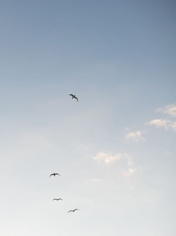 Finding New Frontiers Bird Flying Spread Wings Sky Outdoors Travel Minimal Minimalism Justgoshot