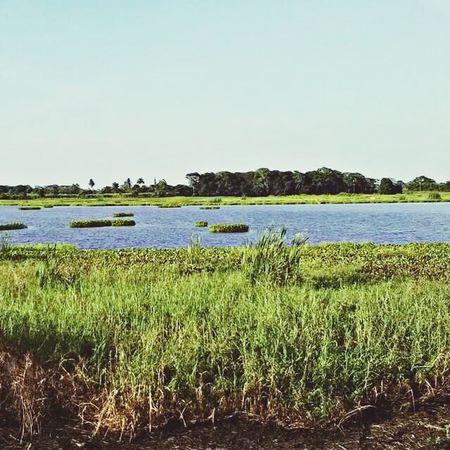 En Algún lugar de Veracruz Landscape EyeEm Nature Lover Beautiful Nature La Laguna