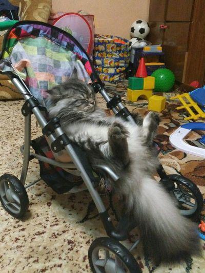 No People Indoors  Day Mammal кошка Тиша в коляске