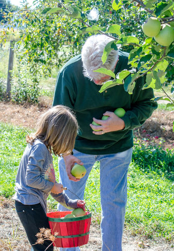 a grandfather helps his sweet granddaughter gather apples in a Michigan orchard Autumn Basket Bonding Boys Casual Clothing Child Childhood Day Fall Freshness Girls Granddaughter Holding Leisure Activity Lifestyles Men Multi-generation Family Outdoors Picking Apples Plant Real People Senior Adult Standing Togetherness Two People Autumn Mood