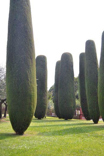 Trees Topiary Garden