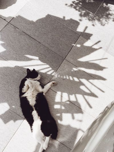 High angle view of cat on shadow