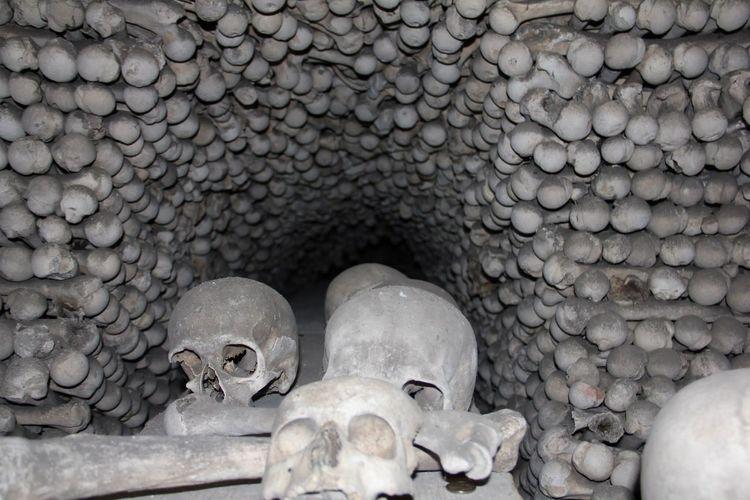 Human Skull Human Body Part Human Skeleton Spooky Grave Human Bone Indoors  The Still Life Photographer - 2018 EyeEm Awards