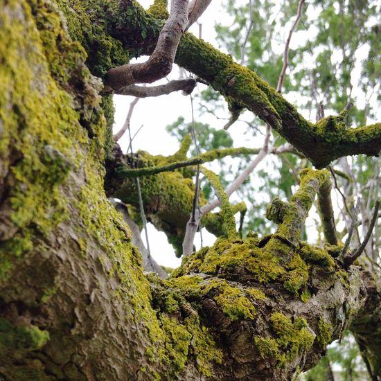 Hugging A Tree Picnic Camping Hello World Freedom Best  Thing Enjoying Life Yolo,bitch Trees