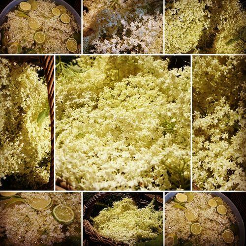 Holla, holder Holunder! Variation Herbal Medicine Herbs For Healthy Life HOLUNDERBLÜTE Holunder Holunderblütensirup Göttin Freya Körbchen Voll Nature Herbs Close-up Wild Garden