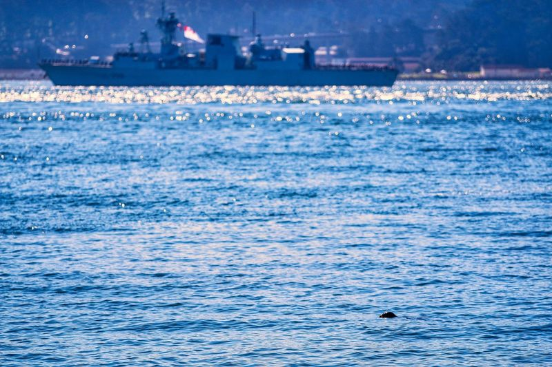 A seal swimming in front of a Canadian Navy Ship. Outdoors Seal Nature Ship Fleet Week No People Water Sea Nature Waterfront Animals In The Wild Beauty In Nature Rippled Nautical Vessel Animal Themes Silhouette Day One Animal Animal Wildlife Bird Swimming Scenics