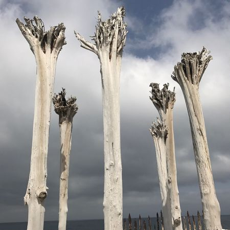 Dead trees Deathly Ghostly Threatening Scary Wood Sculptures Day Low Angle View Outdoors No People Travel Destinations Nature Tree Trunk Tree Sky