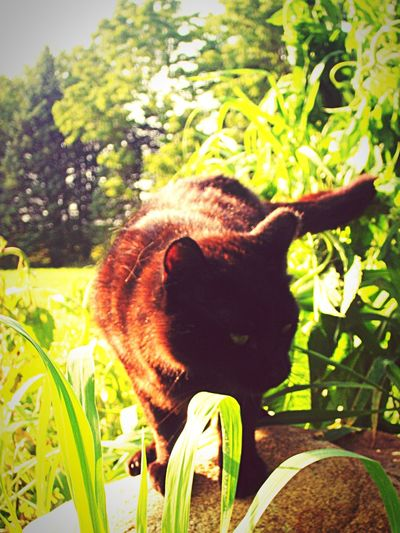 My handsome boy Ichigo cuddling the grass Kitty Cat Black Cat One Animal Growth Animal Themes Nature Domestic Animals No People Day Pets Outdoors Close-up Mammal Grass