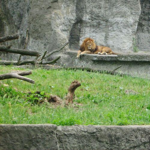 Zoo Zoo Animals