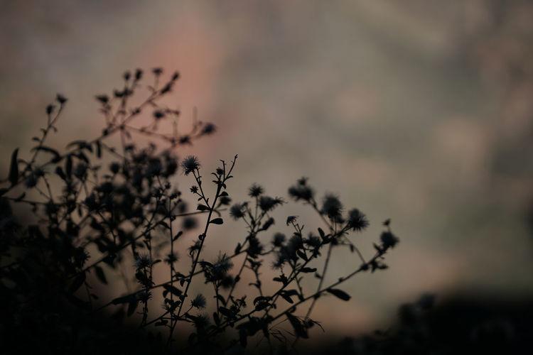 Plant against sky