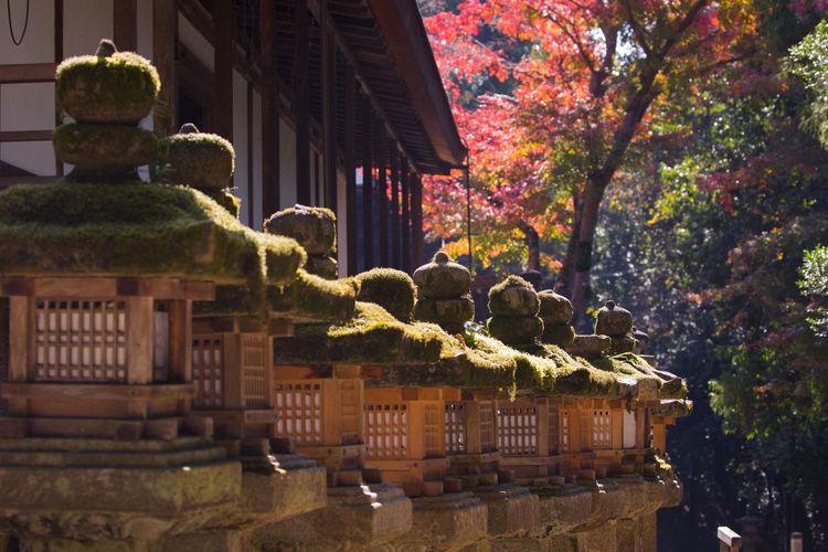 奈良の秋色 Nara Japan Autumn colors Autumn Nara Japan Japan Photography Red Japanese Culture Leaves