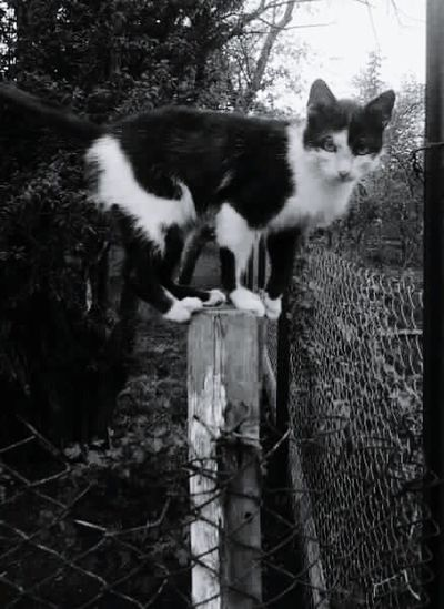 Cat Blackandwhite Photography Black & White Pupok)) Black And White Serious Cat