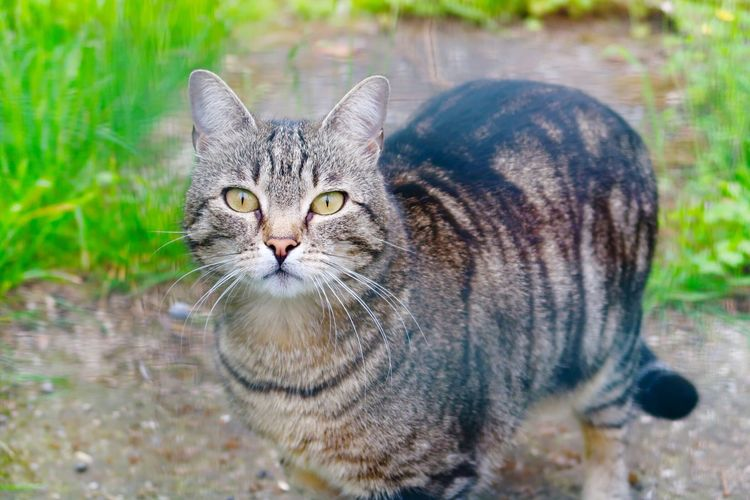 🐱🐱😾😼 Cats Domestic Cat Animal Themes Pets Domestic Animals One Animal Feline Looking At Camera Portrait Mammal Whisker No People Day Outdoors Close-up Sitting Pet Portraits