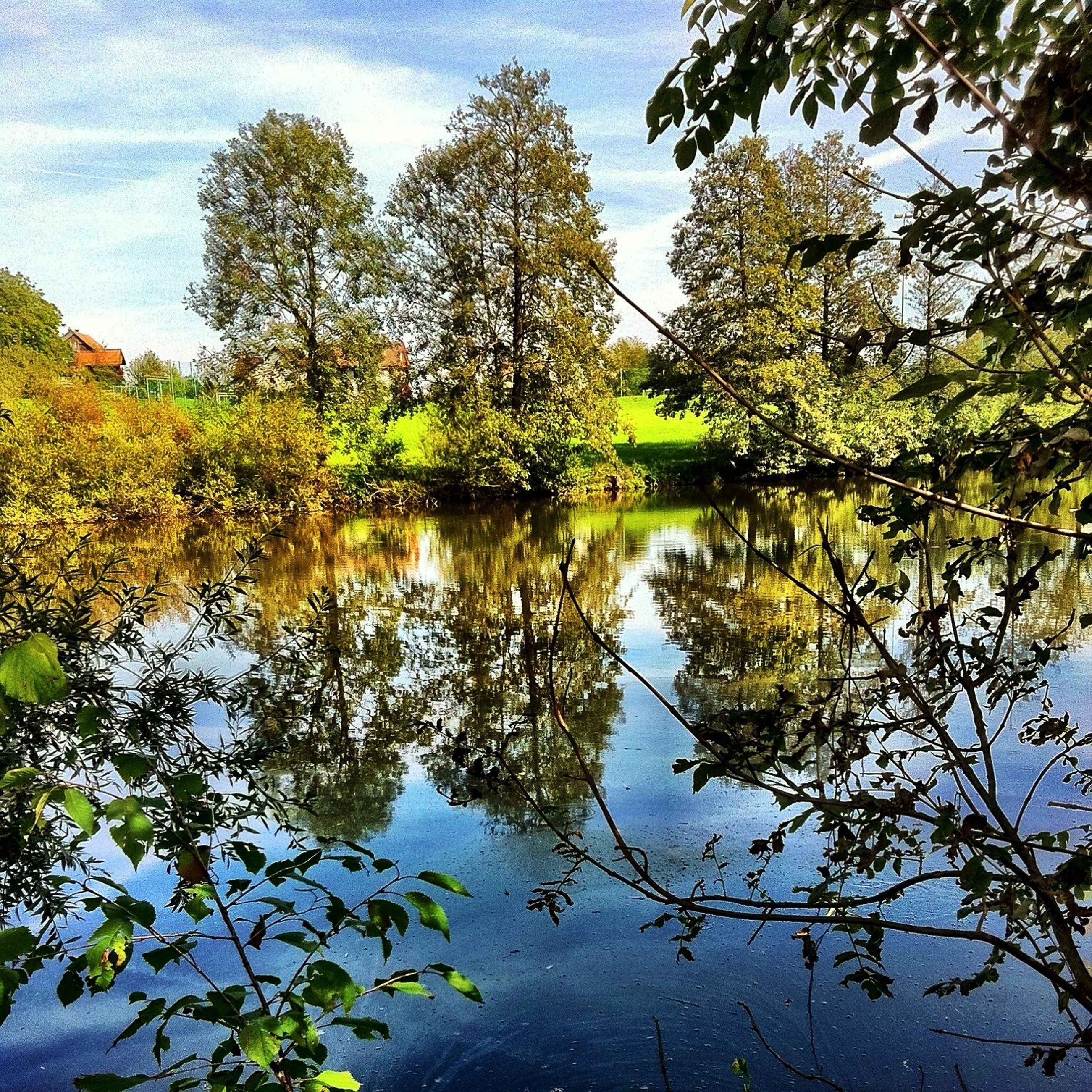 reflection, tree, water, lake, tranquility, sky, tranquil scene, beauty in nature, scenics, nature, branch, standing water, waterfront, growth, leaf, idyllic, day, outdoors, green color, autumn