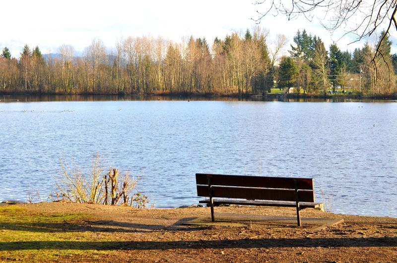 Benches Park Bench Lake View Sunshine Blue Water Still Waters