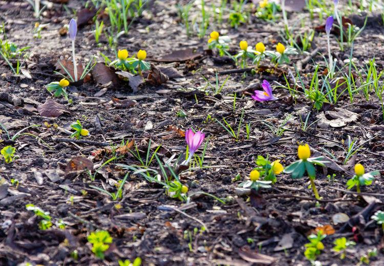 Plant Flower Flowering Plant Growth Nature Purple Outdoors Beginnings Winter