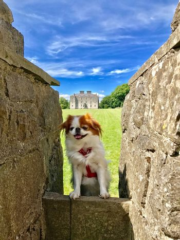 Best little dog! Sky Dog Animal Themes One Animal Pets Domestic Animals Cloud - Sky Built Structure Building Exterior Mammal Outdoors Day Low Angle View Rock - Object Architecture No People Nature Tree Beauty In Nature Postcode Postcards