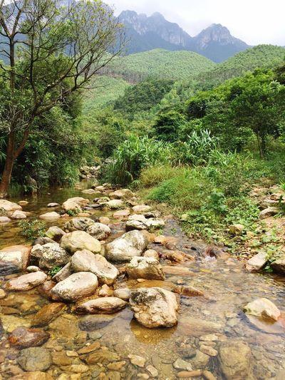 Brook Creek Ravine Valley