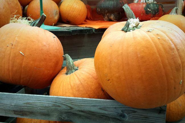 Food Vegetable Healthy Eating Pumpkin Orange Color Organic Halloween Pumpkins Halloweentime Autumn Colors Autumn Autumn Collection Farmer Market
