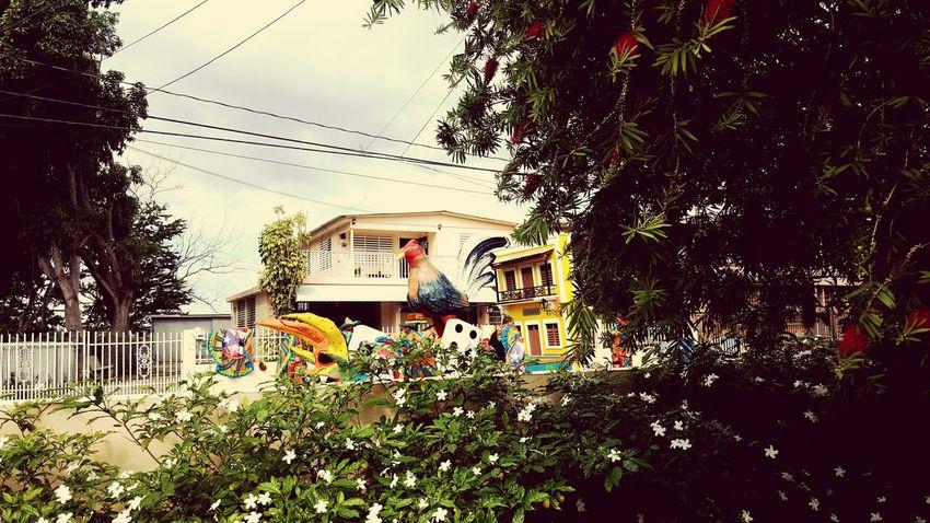 Puerto Rico Hatillo First Eyeem Photo