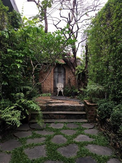 Serendipity Alfresco Chair Brick Wall Home Garden Focal Point Plant Architecture Tree Built Structure Building Building Exterior Growth Nature Plant Part