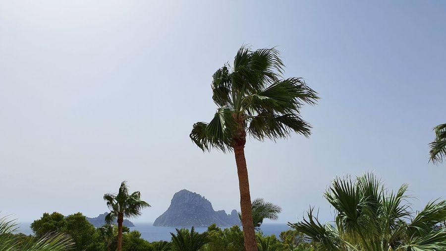 Palmtrees in