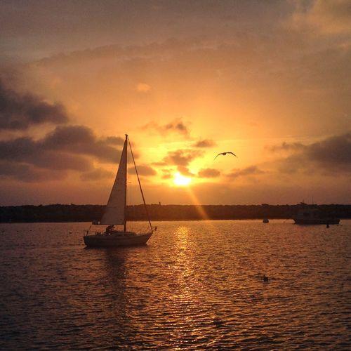 Sunset Nature Pacific Ocean California Redondobeach Traveling Travel Photography First Eyeem Photo Sailing Sailboat