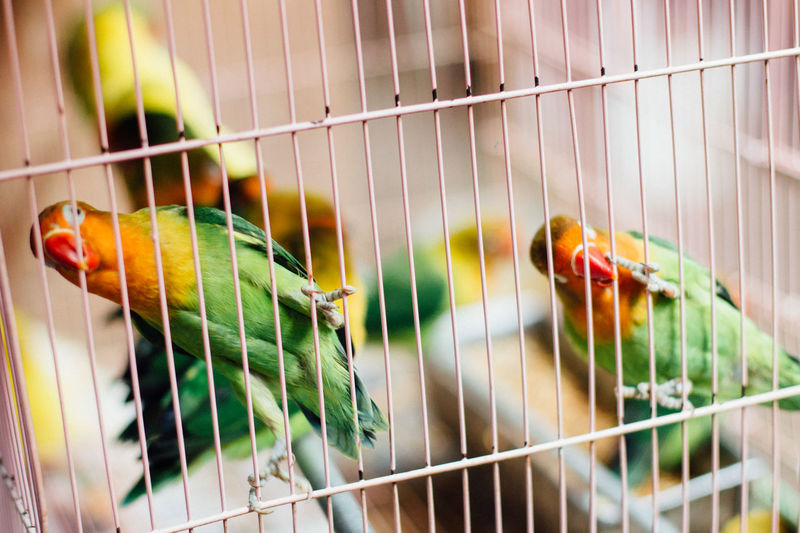 Birdcage Cage Close-up Day Fence Focus On Foreground Hanging In A Row Indoors  Metal Metal Grate Multi Colored No People Pattern Railing Reflection Safety Selective Focus Window