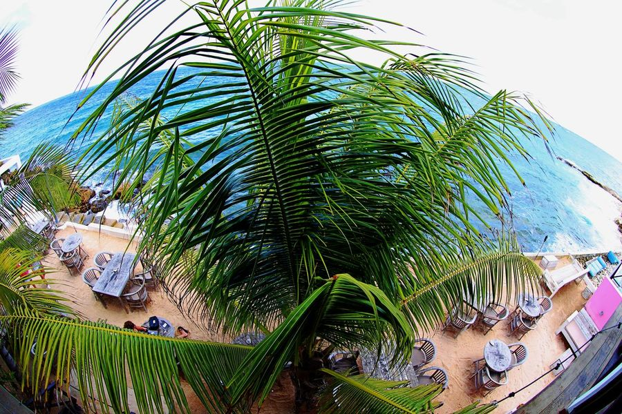 Vacations Beach Blue And Green Day Exotic Place Nature No People Outdoors Palm Tree Sea