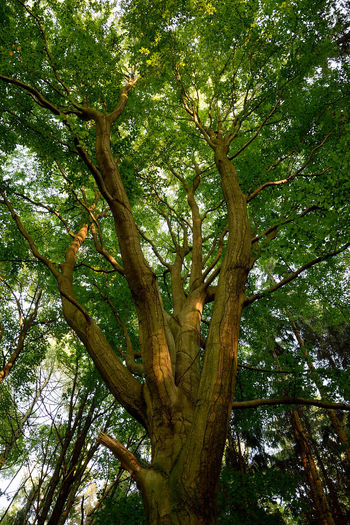 Branches. Backgrounds Beauty In Nature Branch Close-up Day Full Frame Green Color Growth Low Angle View Nature No People Outdoors Sky Tranquility Tree
