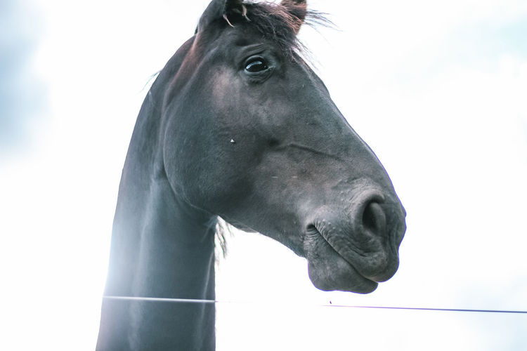 Close-up of a horse