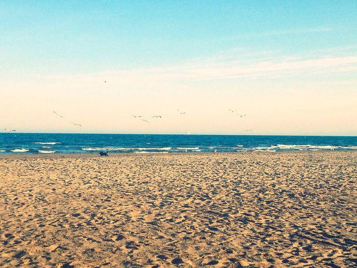 Beach Nature Lovely Life