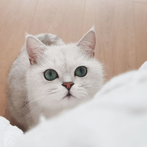 EyeEm Selects Pet Portraits