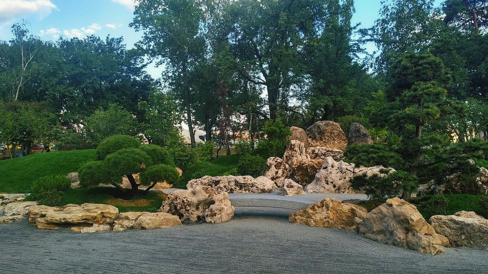 Tree Nature Outdoors Day No People Growth Plant Beauty In Nature Sky Kiev City Life Park Kioto