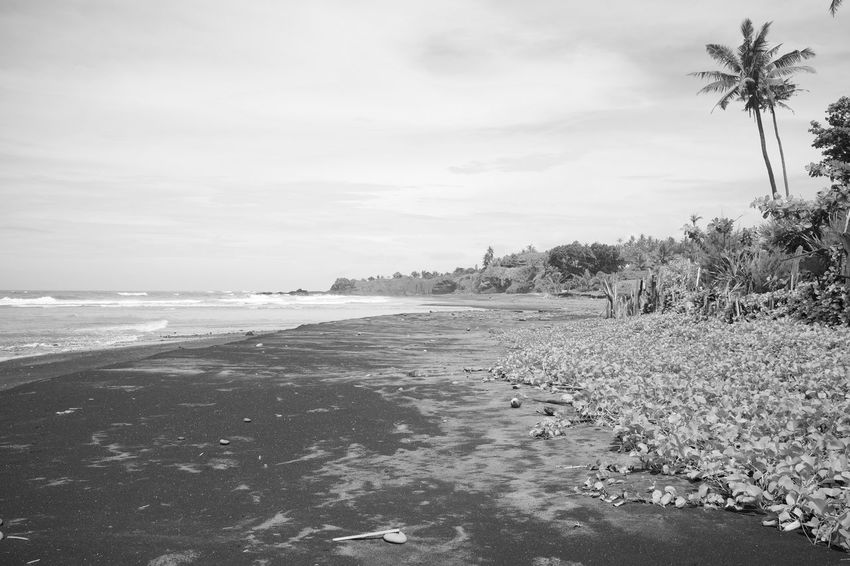 secret surf spot - bali indonesia Bali Copy Space INDONESIA Indian Ocean Tropical Paradise Wanderlust Beach Beauty In Nature Day Landscape No People Outdoors Palm Tree Scenics Sea Secluded Beach Sky Southeast Asia Summer Time  Tranquil Scene Tranquility Travel Magazine Vacation Destination Water