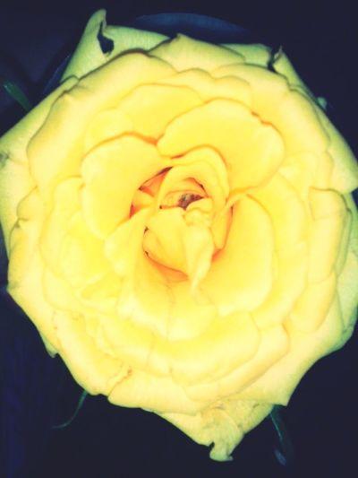 Flowersforboyfriend <3