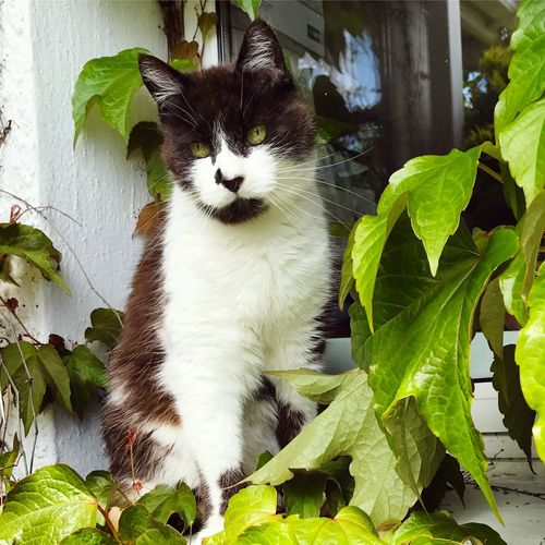 Inconspicuous Cat One Animal Domestic Cat Animal Themes Pets Domestic Animals Leaf Feline Mammal Whisker Plant No People Sitting Outdoors Day Portrait Close-up