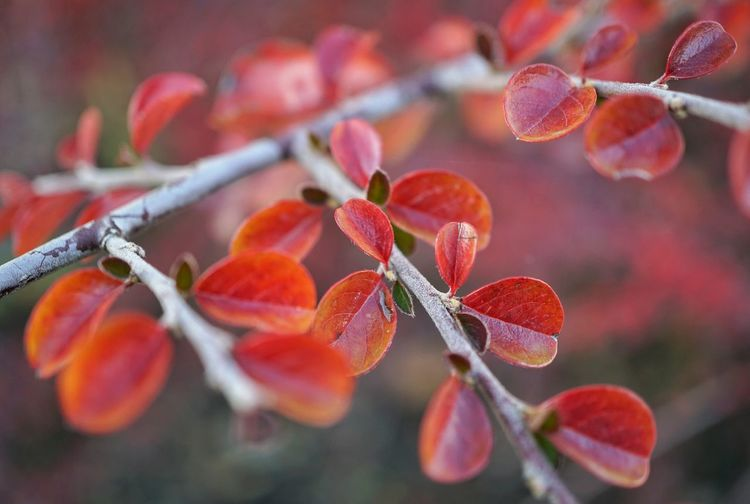 Red Fruit Tree Close-up Plant Blooming Plant Life Leaves