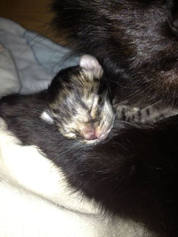 Cat Animals My New Baby