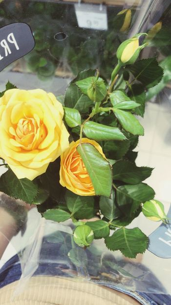 Flower Flowering Plant Plant Rosé Plant Part Beauty In Nature Leaf EyeEmNewHere