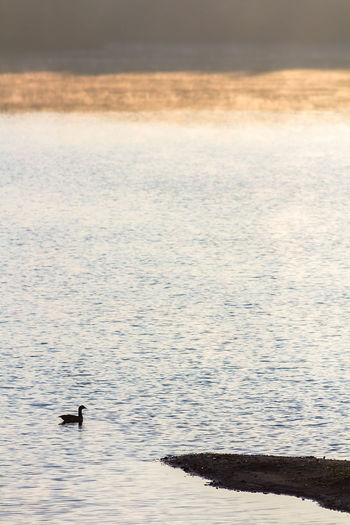 Animal Themes Animal Wildlife Animals In The Wild Beauty In Nature Bird Day Lake Nature No People One Animal Outdoors Scenics Swimming Water