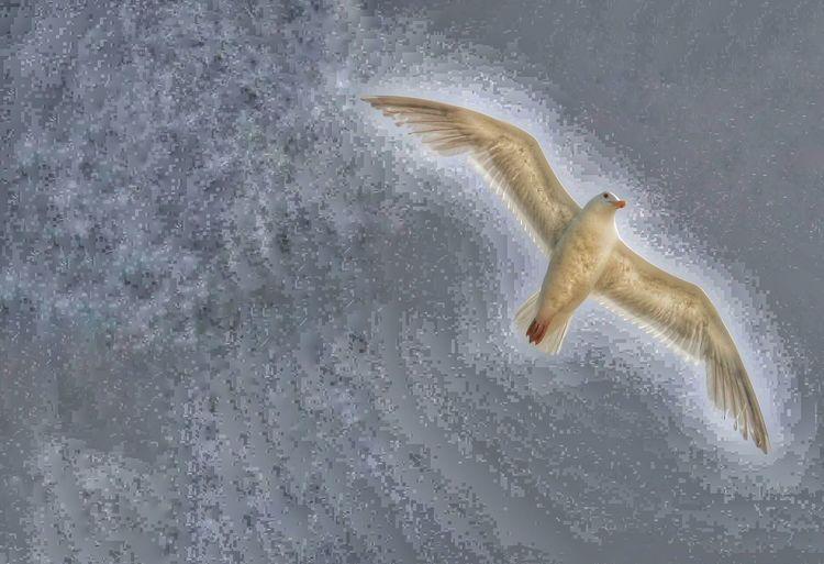 Seagull Oregon