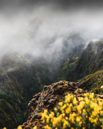 Mountain Beauty In Nature Scenics - Nature Plant Tranquility Nature Tranquil Scene Day No People Non-urban Scene Tree Environment Mountain Range Fog Land Growth Yellow Idyllic Rock Outdoors Mountain Peak
