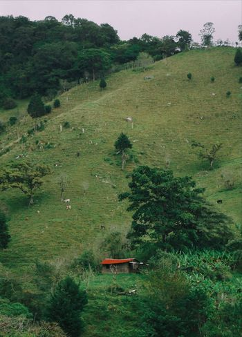 Nature Agriculture Farm High Angle View Landscape Social Issues Rural Scene Tree No People Outdoors Nature Animal Themes Grass Day Rice Paddy Lush - Description Wildlife Beauty In Nature Plant Freshness Life Live For The Story