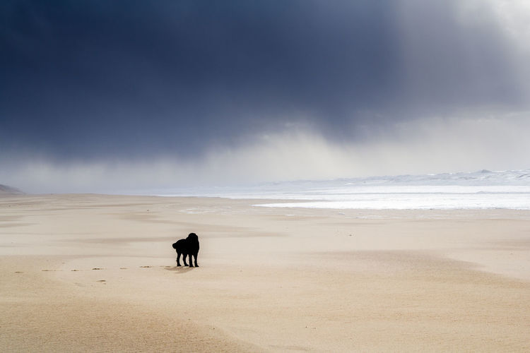 Animal Themes Arid Climate Beach Cloud - Sky Day Desert Dog Domestic Animals Full Length Horizon Over Water Landscape Mammal Nature No People One Animal Outdoors Sand Sand Dune Scenics Sea Sky Travel