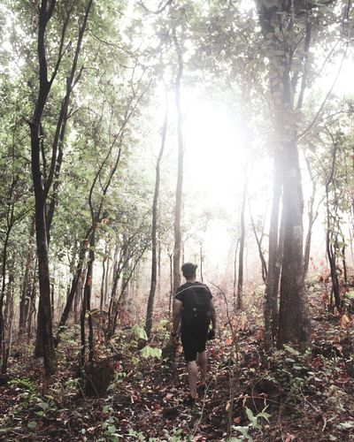 There are no shortcuts to any place worth going 🌱 Tree Plant Rear View Forest One Person Growth Land Tranquility Beauty In Nature Men Leisure Activity Tree Trunk Full Length Real People Nature Day Lifestyles Non-urban Scene Trunk Outdoors The Traveler - 2018 EyeEm Awards The Great Outdoors - 2018 EyeEm Awards